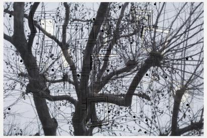 trees_PaulColdwell.jpg